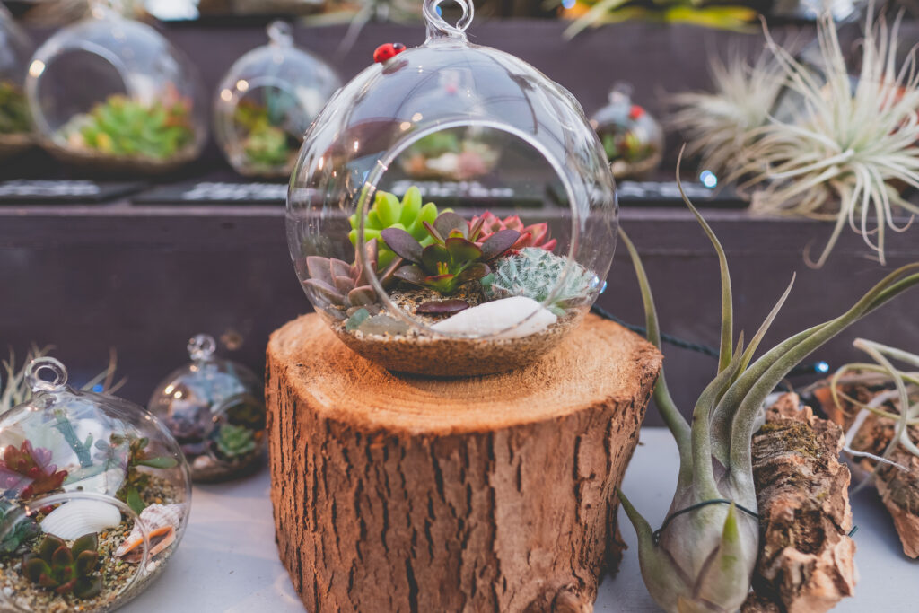 Find unique Christmas gifts for plant lovers at Fowey Christmas Market